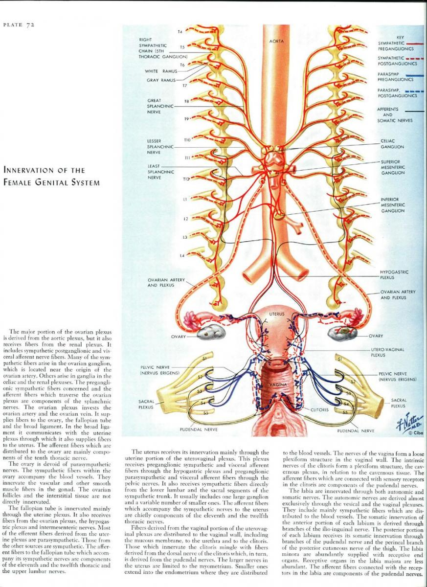 Anatomy of the pudendal nerve health organization for pudendal source volume 1 nervous system by frank h netter md 1968 ccuart Choice Image